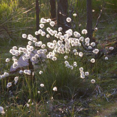 blommor-skog