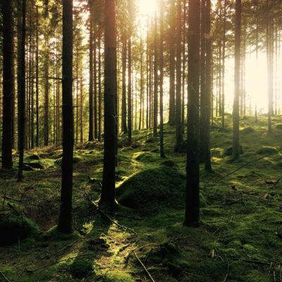 skog-mossa