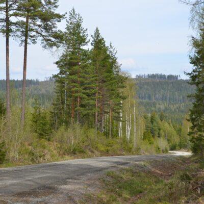 skog-vag
