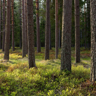 skog_7308_large orginal